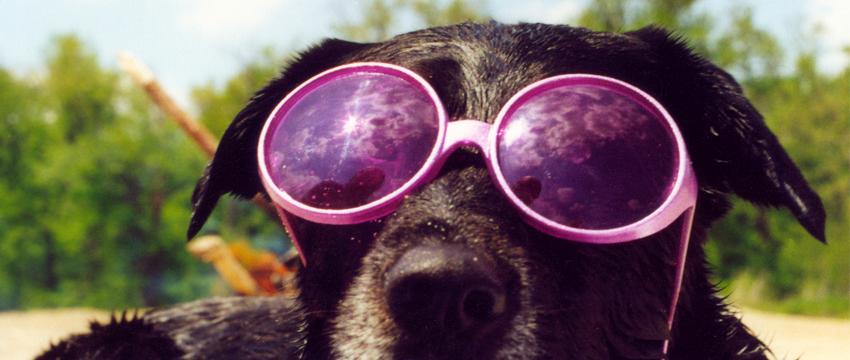 Modelos de Óculos – Inspirações